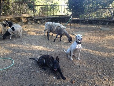 Dog Training For Owners Folsom